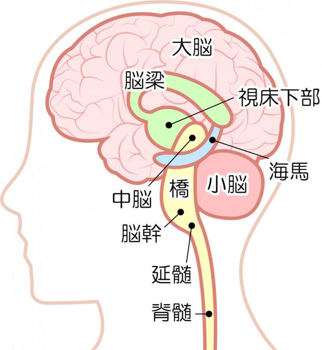 脳コントロール