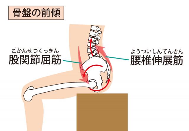 脊柱管狭窄症の骨盤 背骨