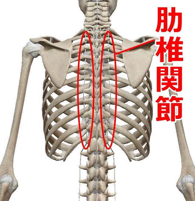 脊柱管狭窄症 腰椎椎間板ヘルニア   大和市の整体 大和駅前カイロプラクティック