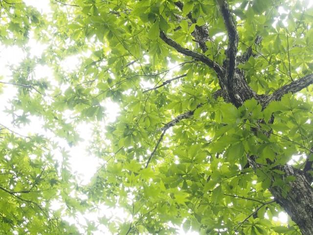 セロトニン活性 日光浴