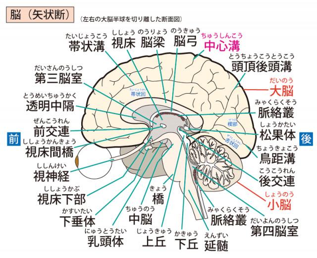 めまい ふらつき 脳脊髄液