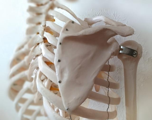 五十肩 四十肩 肩甲骨の位置異常、肩甲胸郭関節