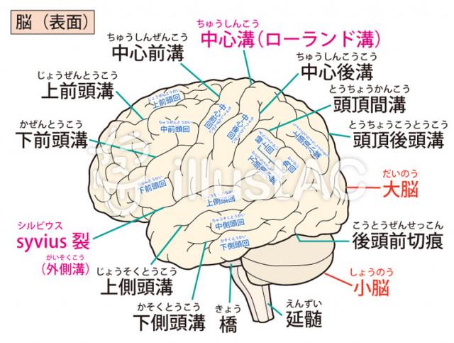 めまい ふらつき 小脳