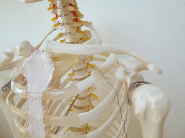 五十肩 四十肩 胸鎖関節、肩鎖関節、胸肋関節、肋椎関節