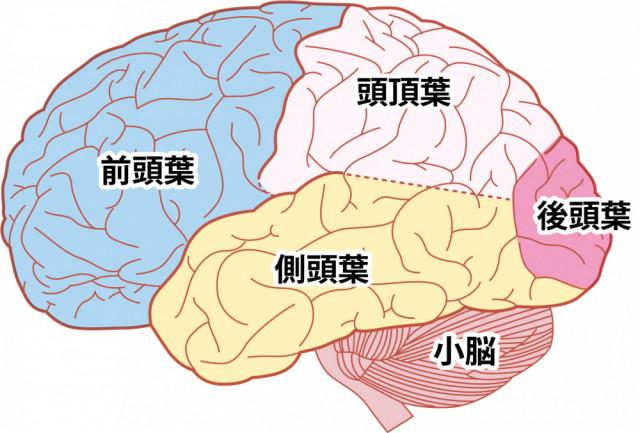 扁桃体コントロール 前頭葉活性
