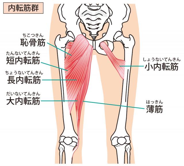 鵞足部の調整